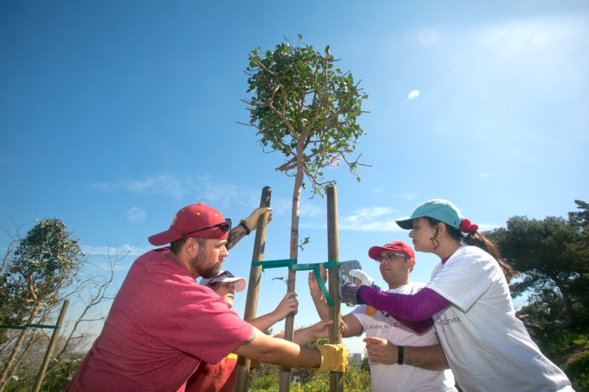 The USC Alumni Club of L.A. Beach Cities volunteered to plant trees at Hopkins Wilderness Park in Redondo Beach.